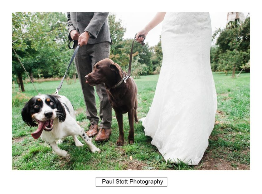 bride groom dogs 001 - Crow Farm - Gemma and Phil