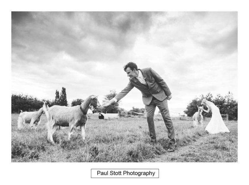 bride groom goats 002 - Crow Farm - Gemma and Phil