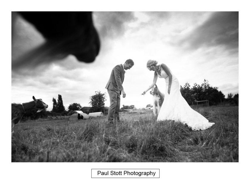 bride groom goats 003 - Crow Farm - Gemma and Phil